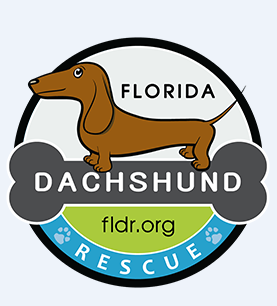 Florida Dachshund Rescue