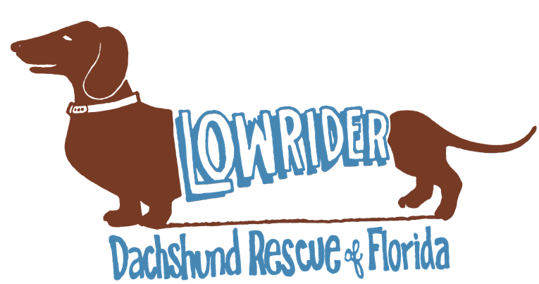 Lowrider Dachshund Rescue of Florida