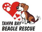 Tampa Bay Beagle Rescue